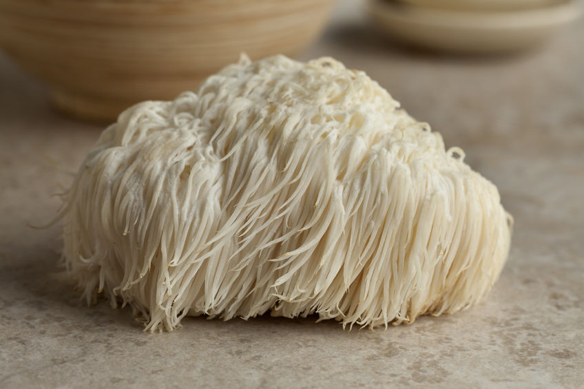 This is a lion's mane mushroom. They have been used in Chinese Medicine for centuries.