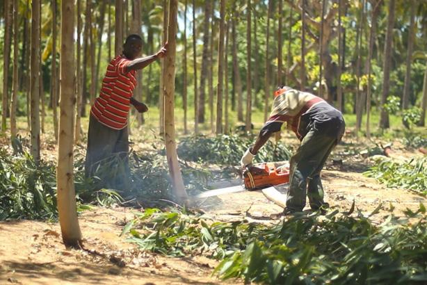 Harvesting-2.jpg