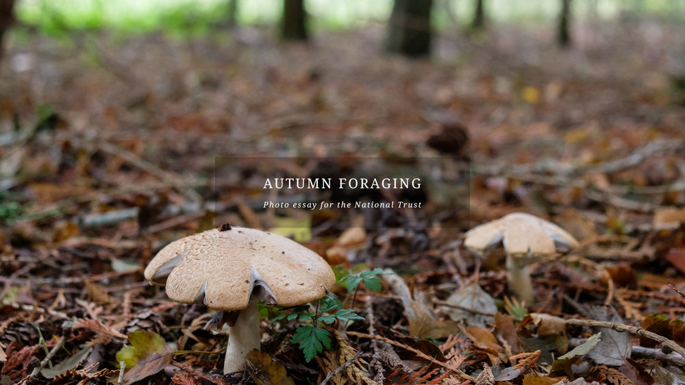 Autumn Foraging.jpg
