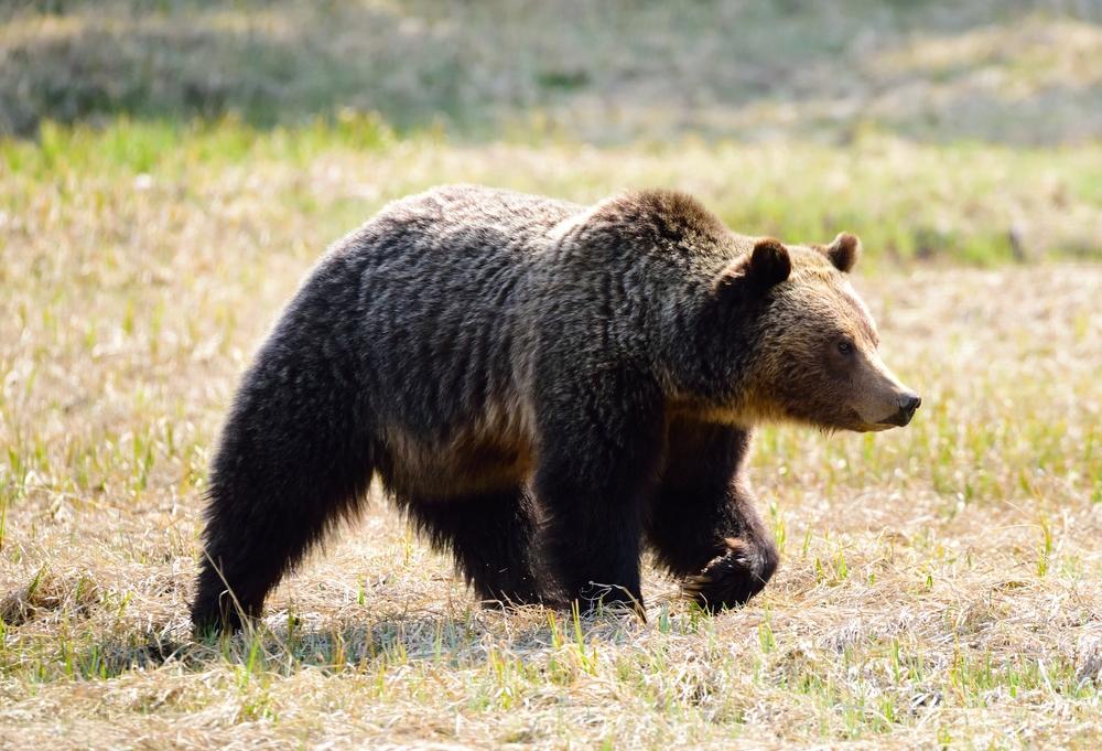 bear 5.jpg