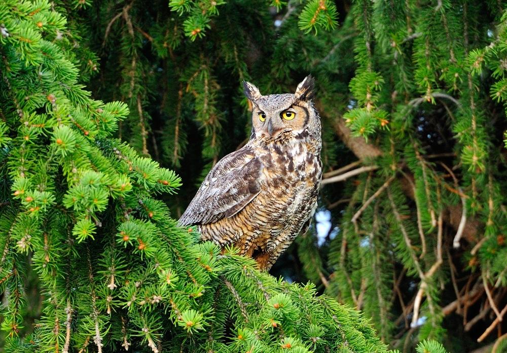 owl 6.jpg