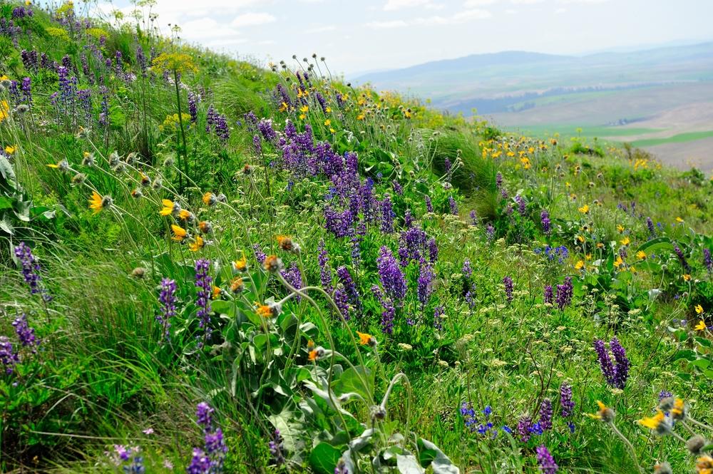 sflowers.jpg