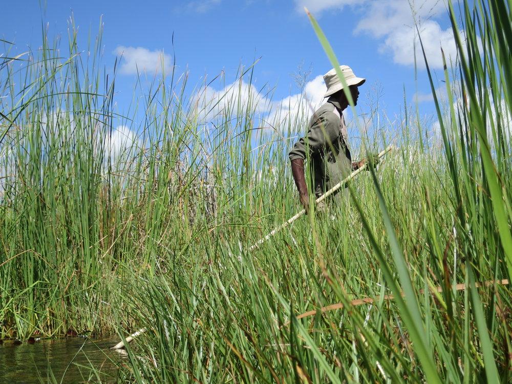 Traditional Mokoro Boatsman - Okavango Delta, Botswana