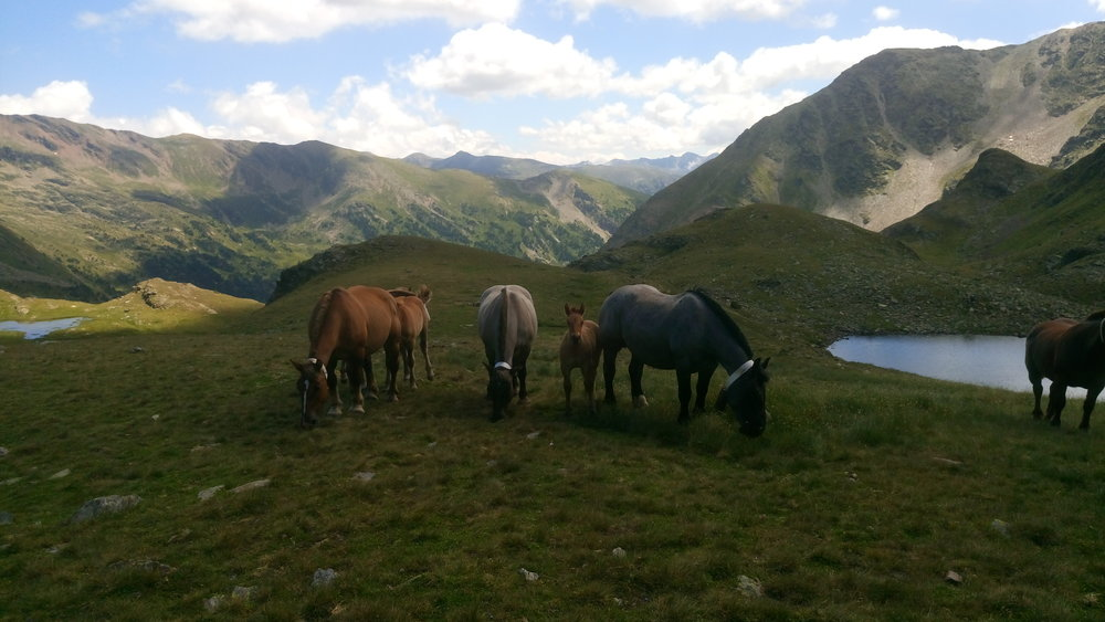 Grazing horses - Andorra