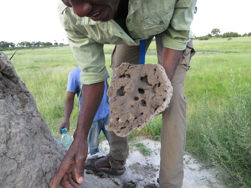 Termite mound - Okavango Delta, Botswana