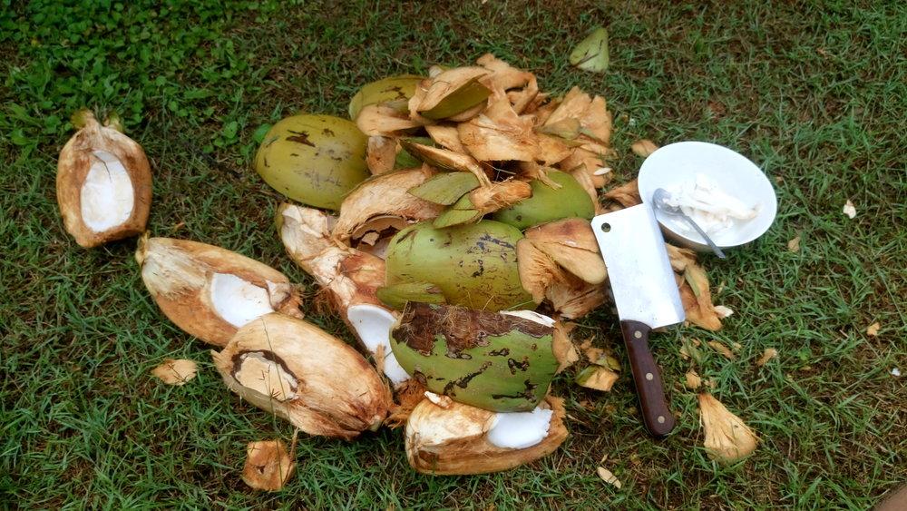 Chopping up freshly gathered coconuts in Kurrimine Beach, Far North Queensland, Australia