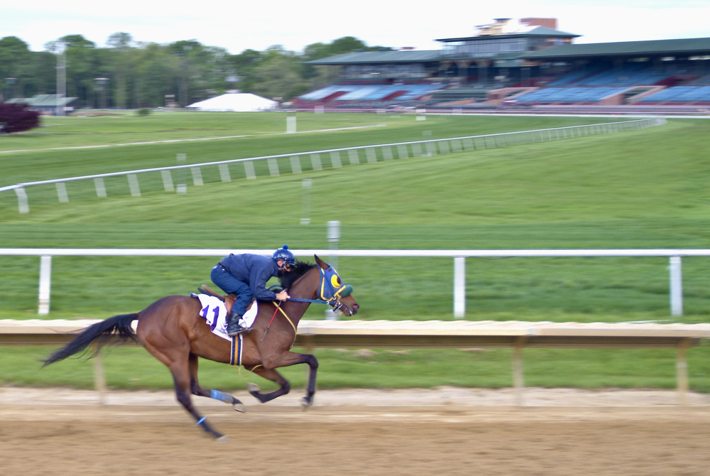 racehorse01.jpg