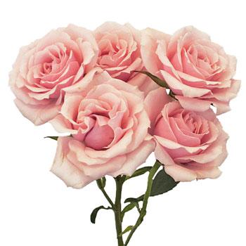 Spray-Rose-Majolica-Stem-350_d3f2d0da.jpg
