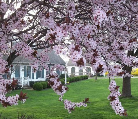 2012_spring_.jpg