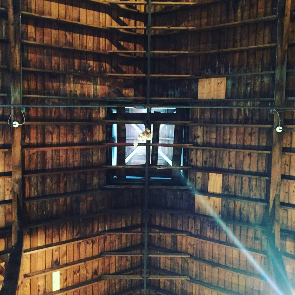 shaker barn wedding