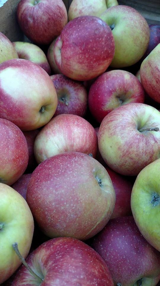 apples 2015.jpg