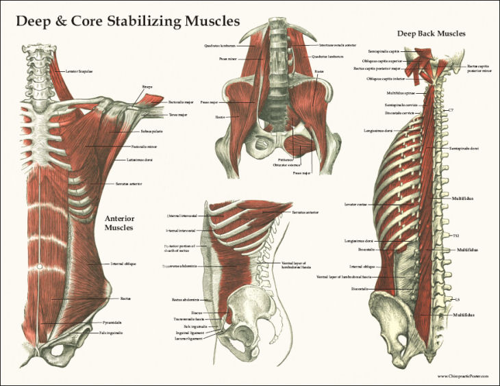 Resolving Pain Part 2 The Low Back Allied Health And Chiropractic