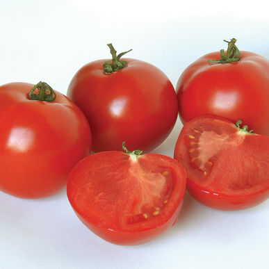 Slicer Tomato - Polbig  Tasty. Meaty. 6-8 oz globe shaped tomato.