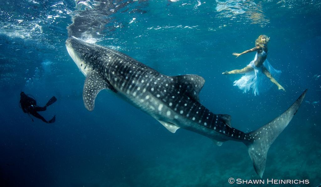 Если акулы преследуют и нападают на вас, то неминуемы неудачи, которые ввергнут вас в пучину.