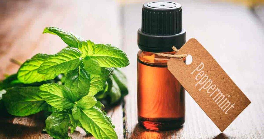 peppermint-oil-uses-benefits-01312017-min.jpg