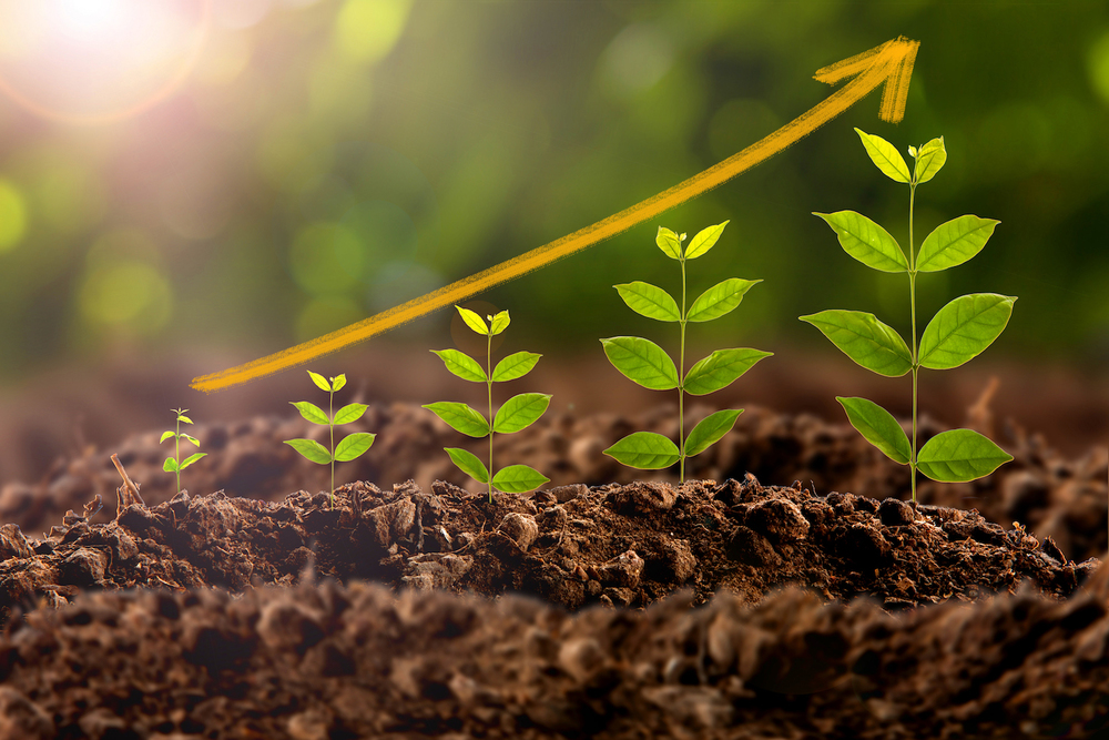 management-growth
