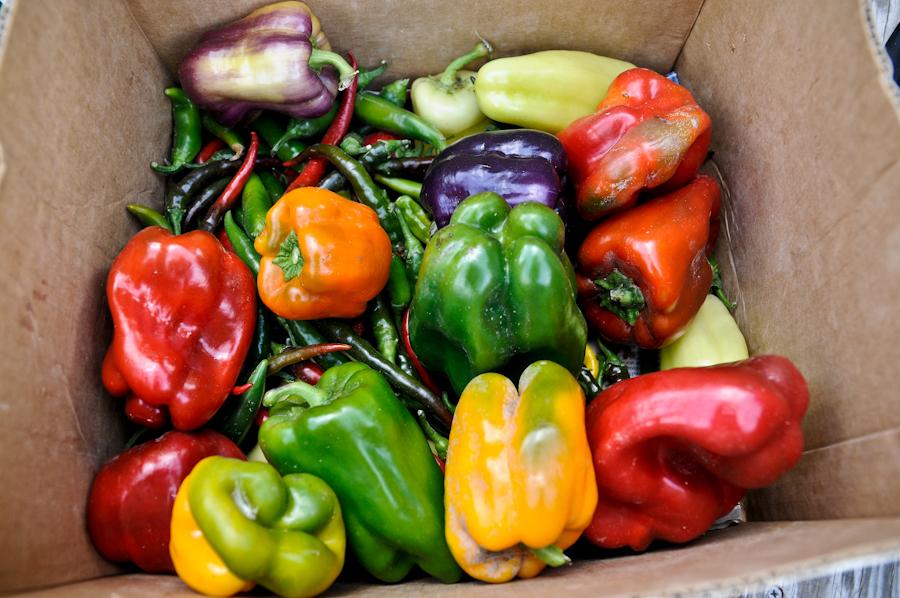 feastival peppers 761d10_6255ff0dcad81af4dc702449e7beba38.jpg