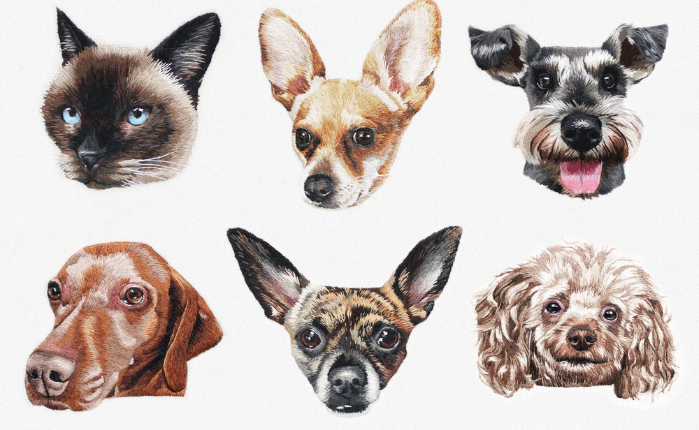Pet_portraits_compliation_group.jpg