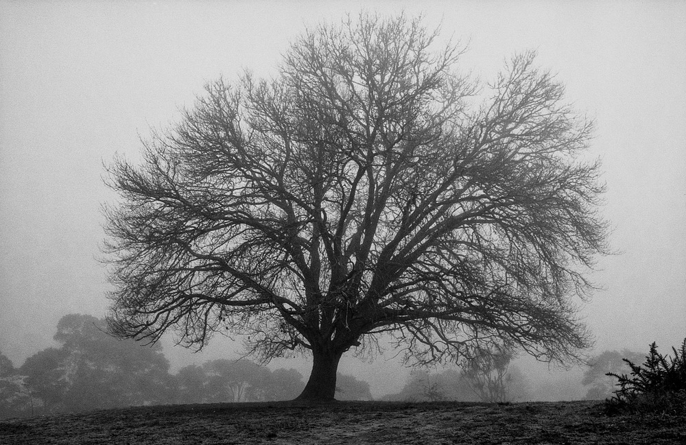 foggy_tree-2.jpg