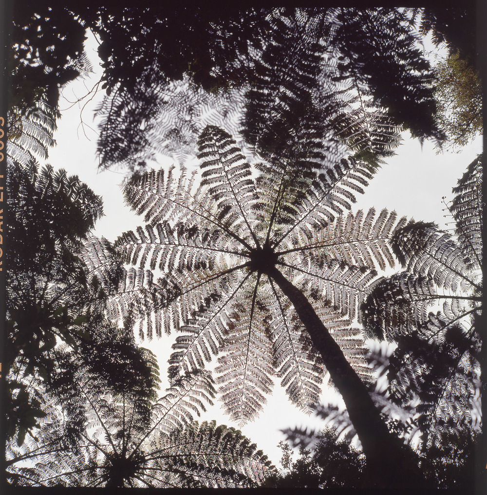 fern_tree.jpg