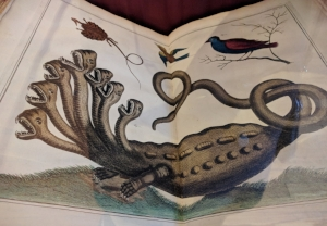 "A Hydra in Albert Seba's ""Hall of wonders,"" 1734-1765, Amsterdam."