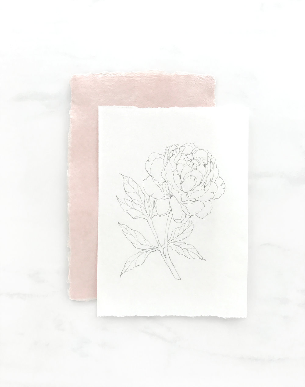 Illustrated Peony