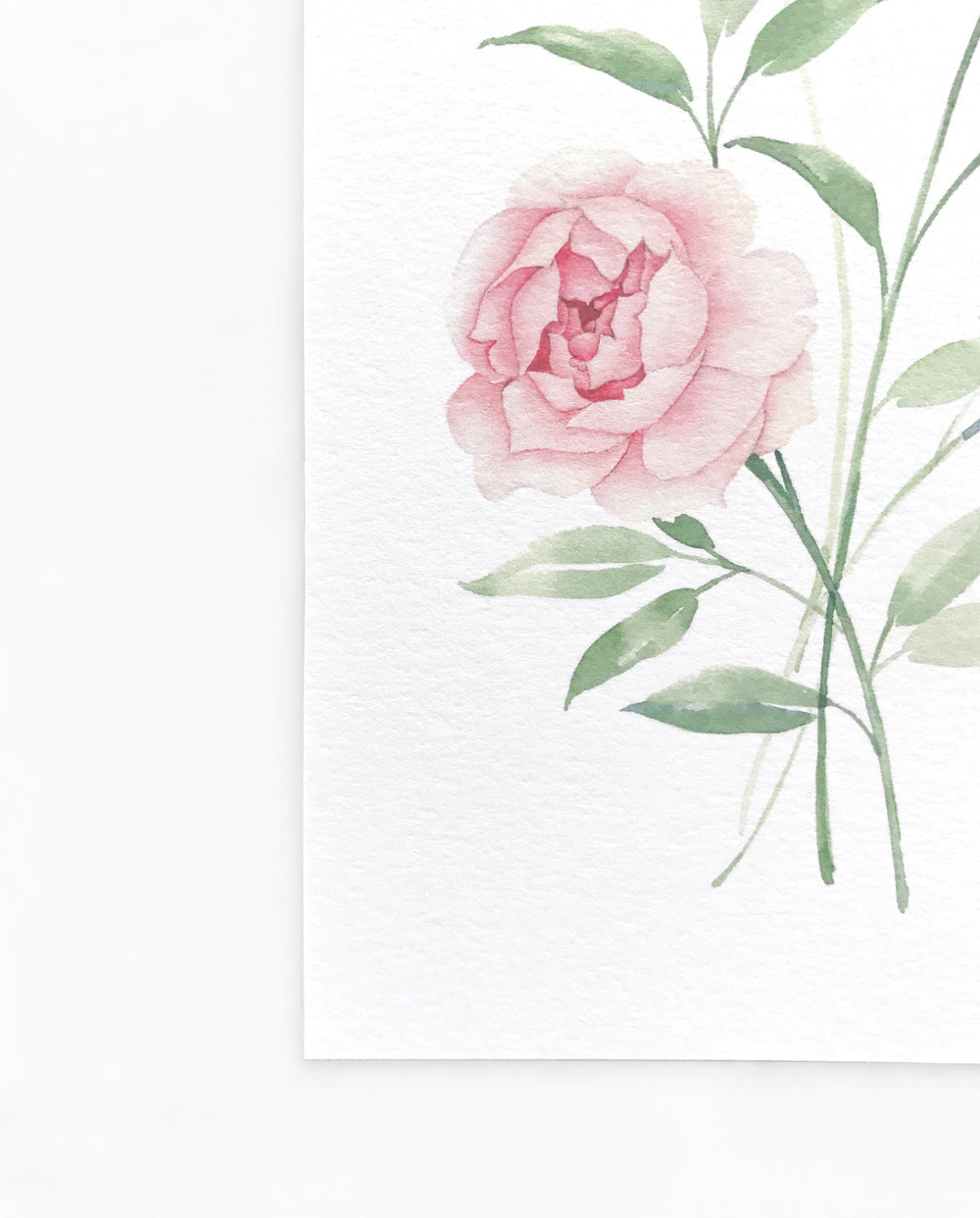 Watercolor Botanical Rose
