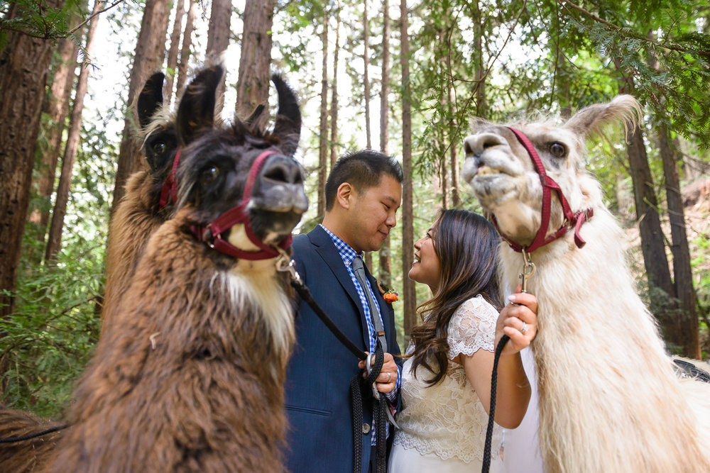 Oakland Redwoods wedding