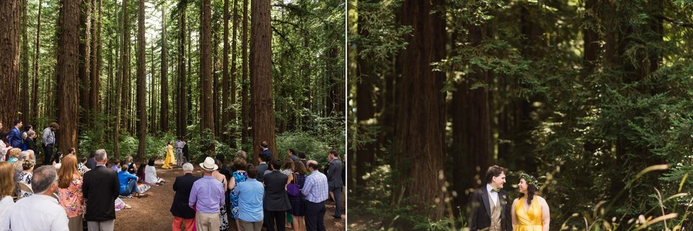 Wedding ceremony under redwood trees