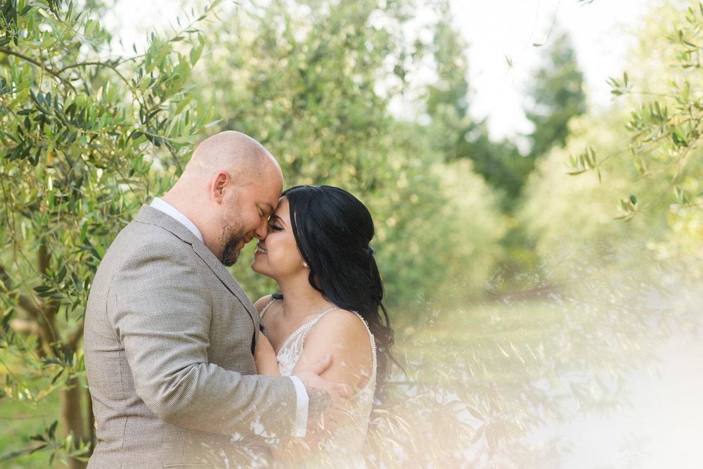 Bride and groom in an olive orchard