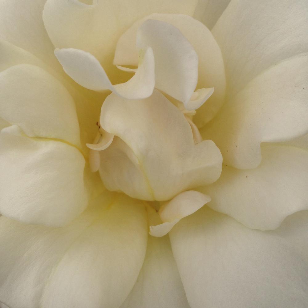 Bellissima Romantica 1.jpg