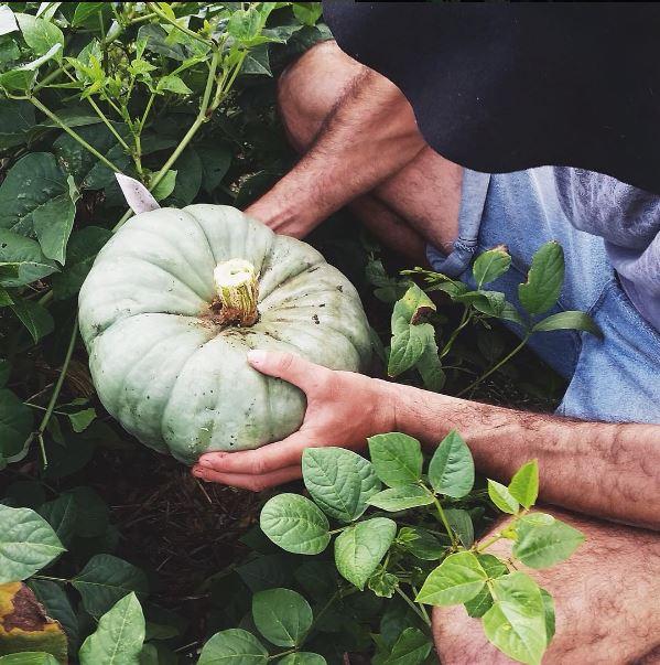 pumpkin - greeen.JPG