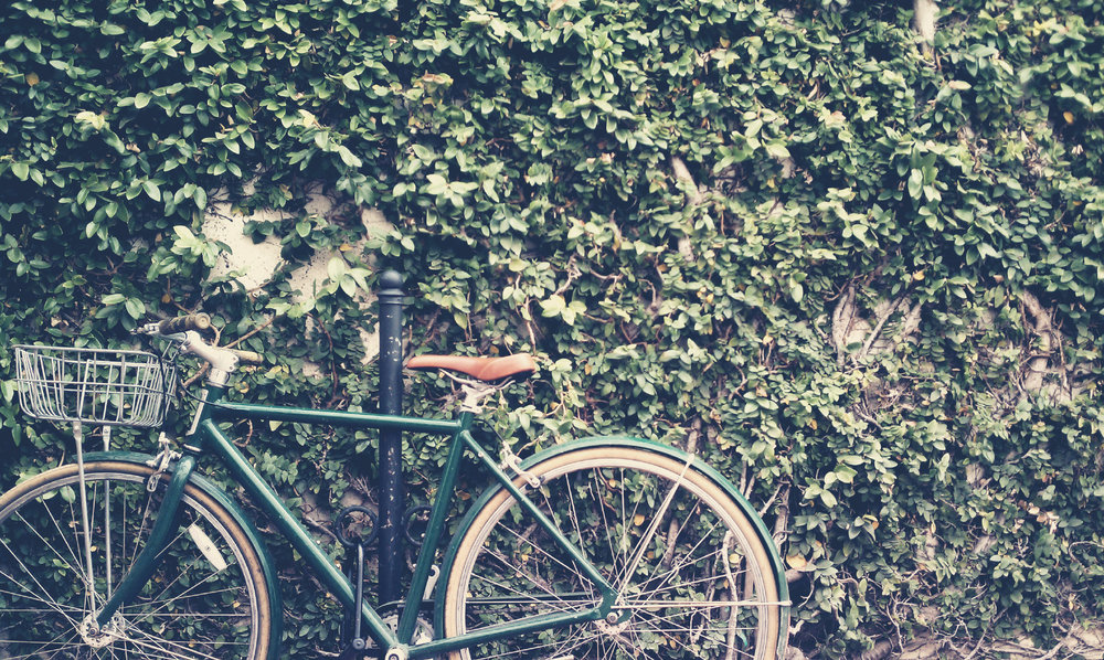 Bike with Ivy