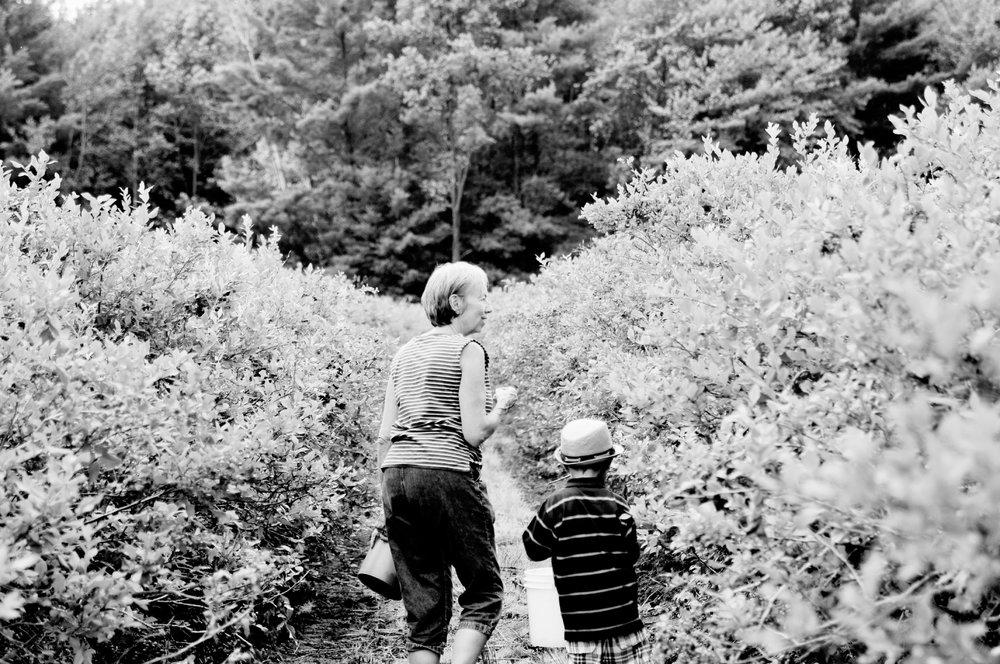 Family Picking Blueberries