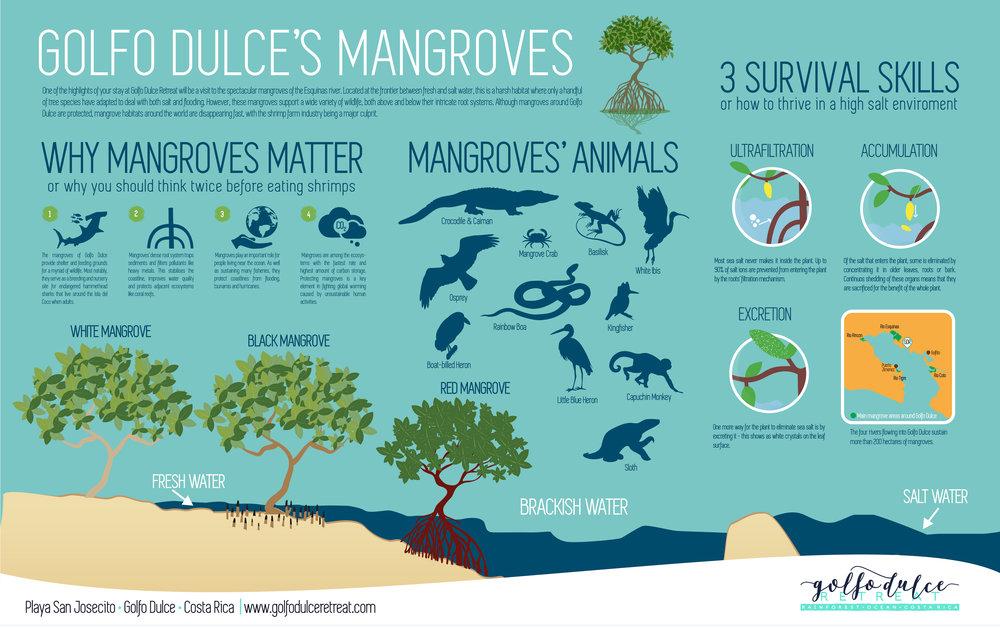 mangroves screen size.jpg