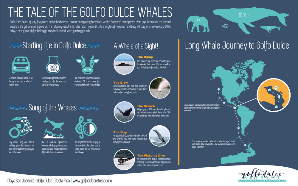 The Tale of the Golfo Dulce Whales