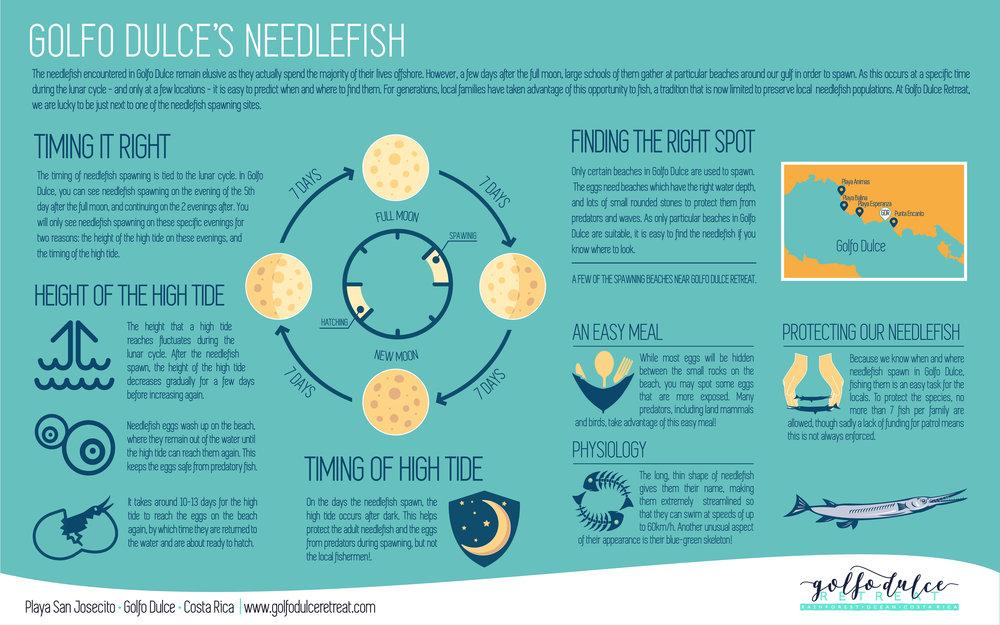Golfo Dulce's Needlefish