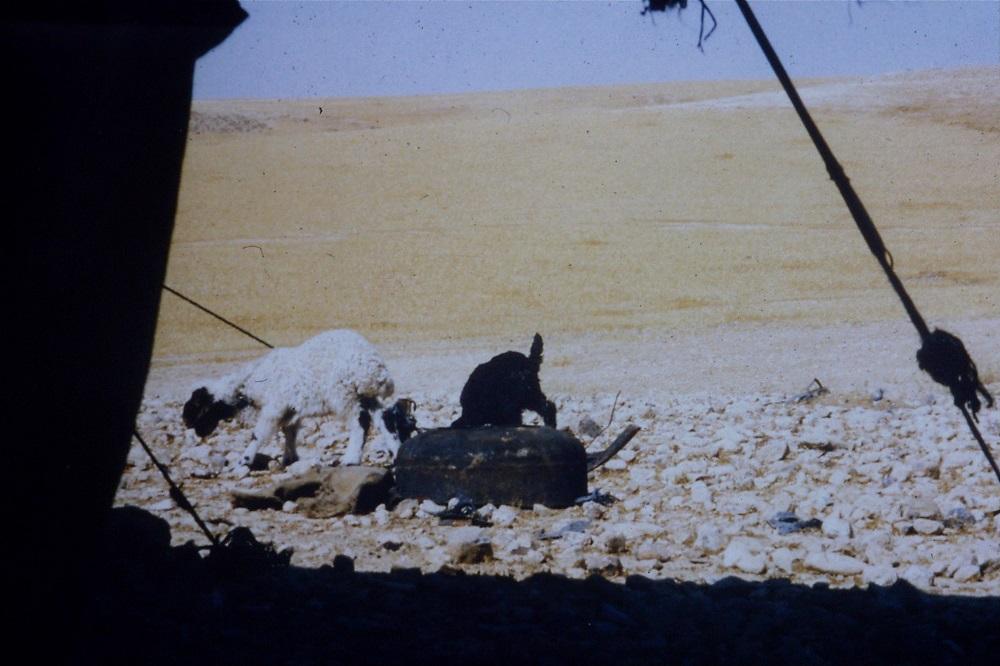 bedouin-goats-negev-1990.jpg