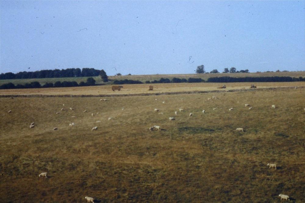 bedouin-negev-landscape-1990.jpg