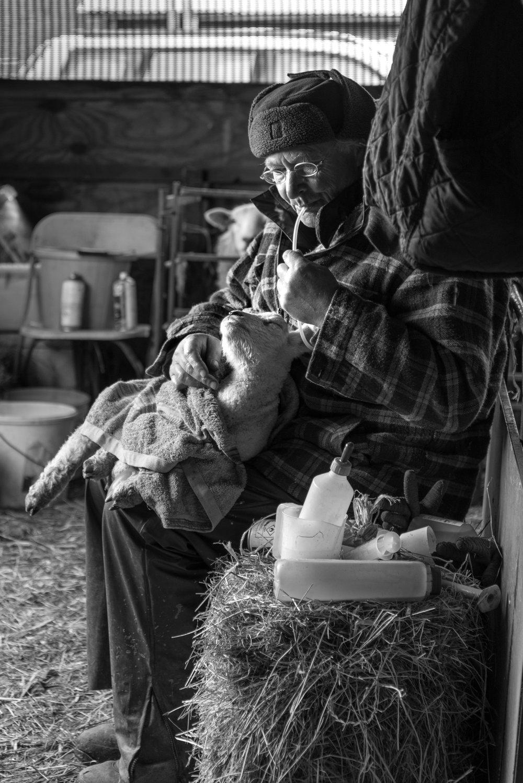 Lucy Gold Simon Harpur with Lamb-3414.jpg