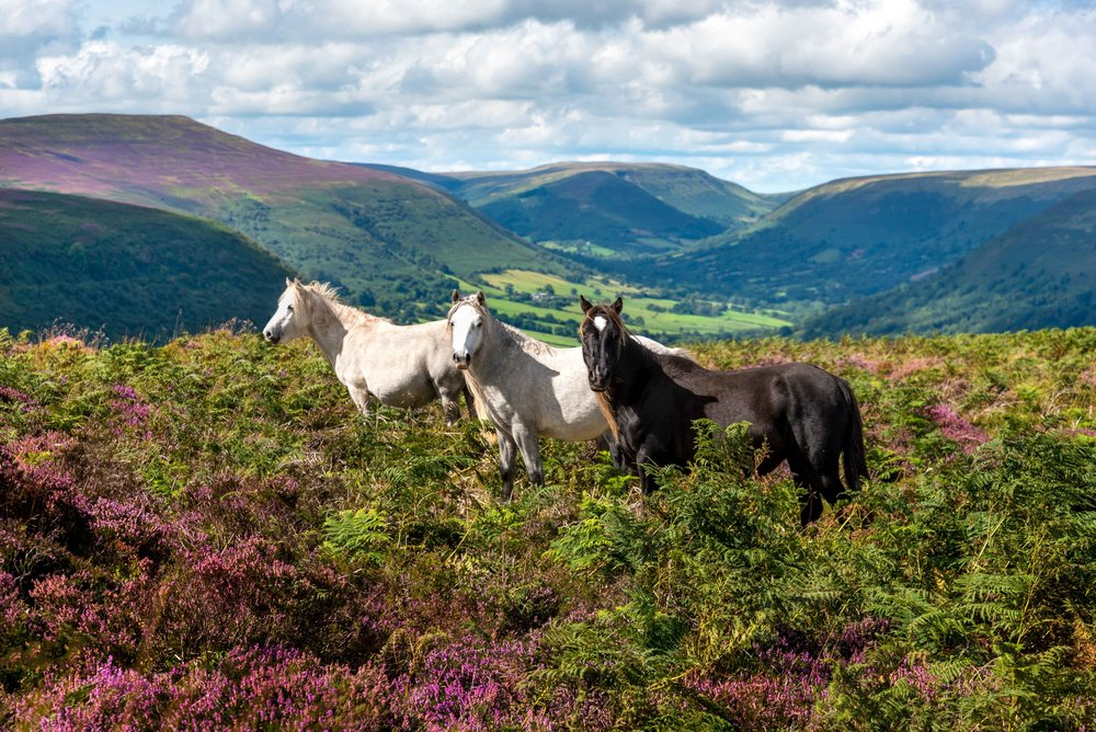 Three Horses_DSC6315.jpg