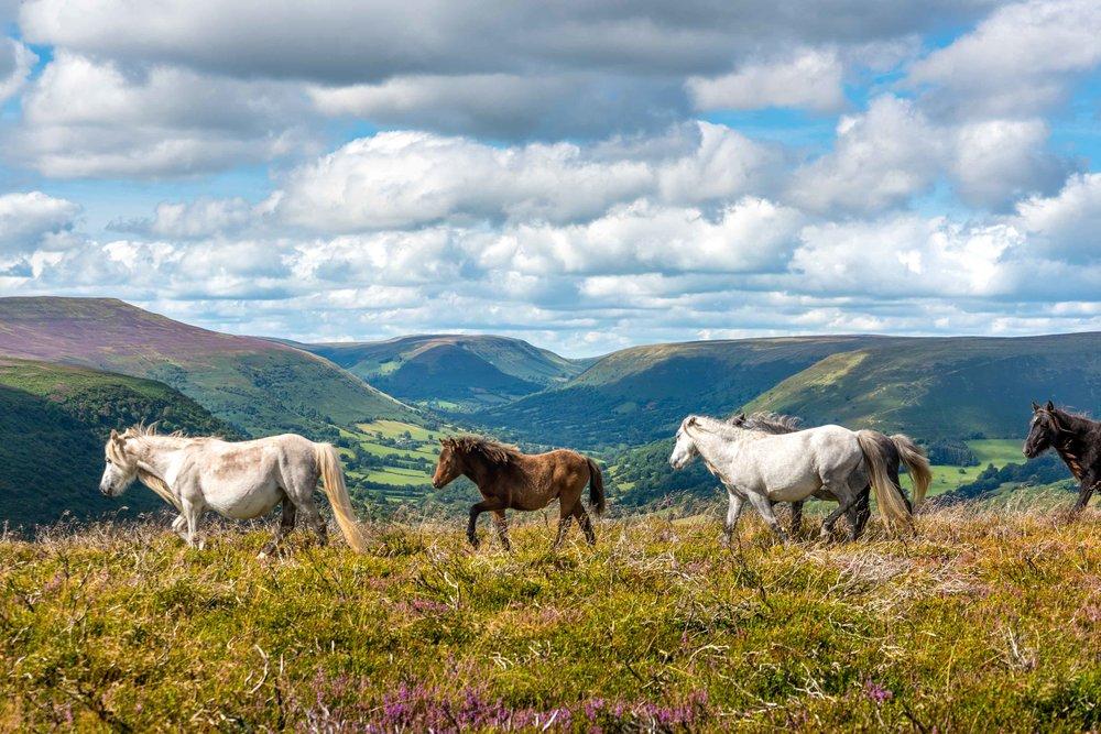 Wild Ponies Llantony-6324.jpg