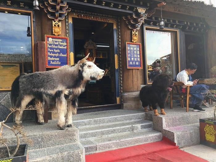 Weird-Animals-China-Off-The-Beaten-Path.jpg
