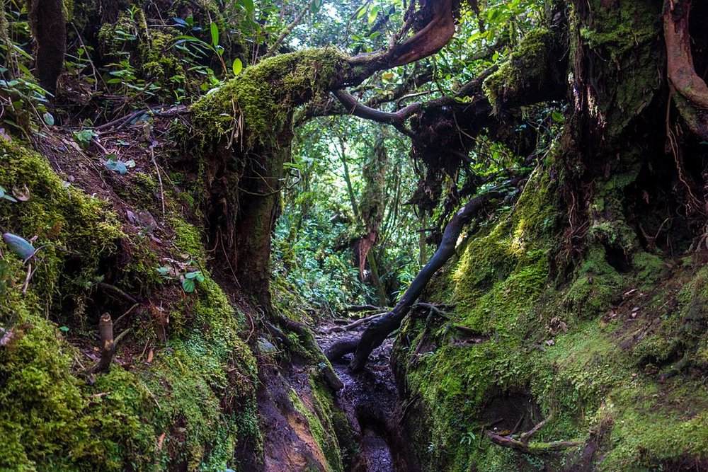 Mossy-Forest-Malaysia-Itinerary.jpg