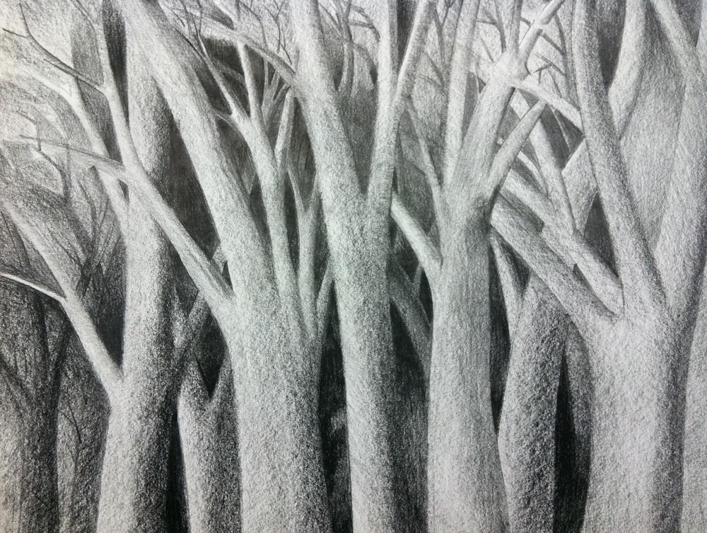 Trees Drawing.jpg