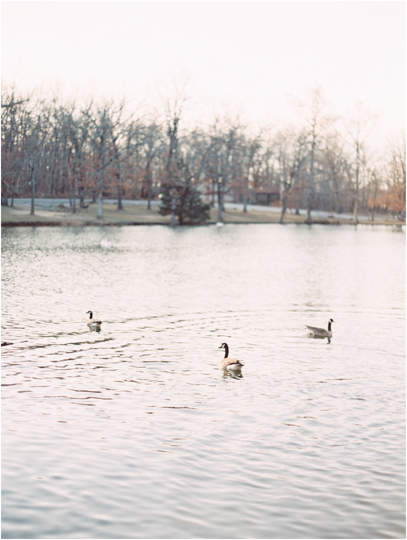 ducks are returning - photography by Jordan Brittley
