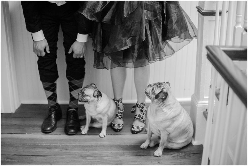 Pug Dogs by Jordan Brittley
