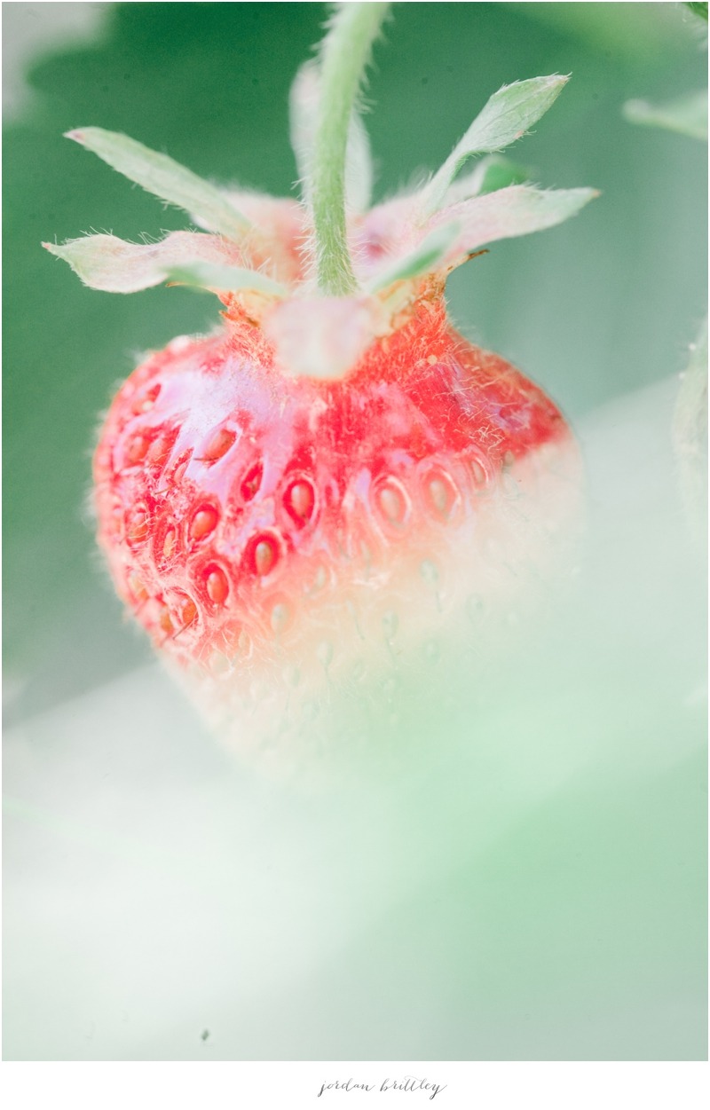 Strawberries_002