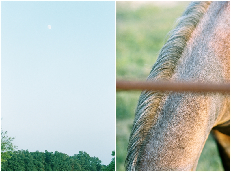 evening sky and horse mane photography by jordan brittley_010