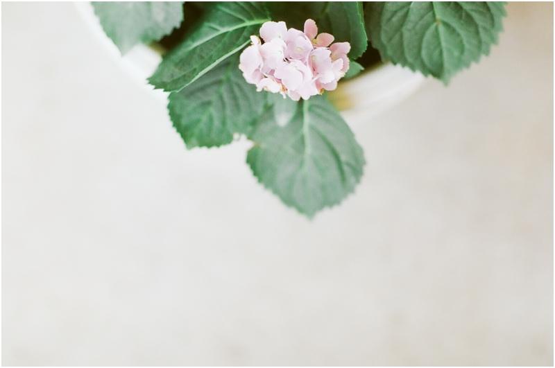 hydrangeas in a pot - photography by jordan brittley_001